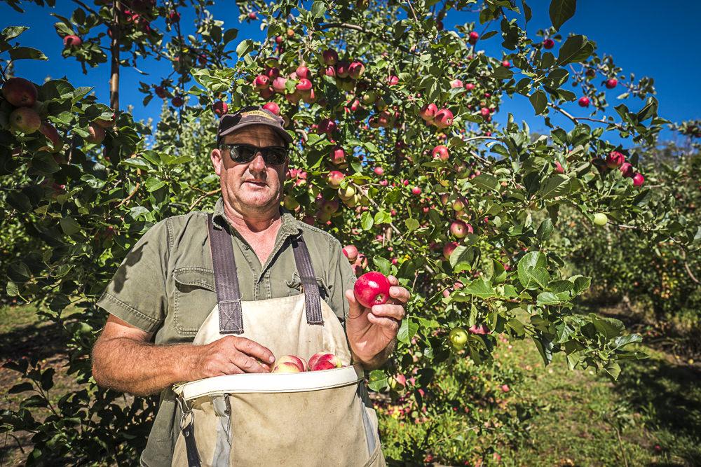 lobo-cider-apples-0396.jpg