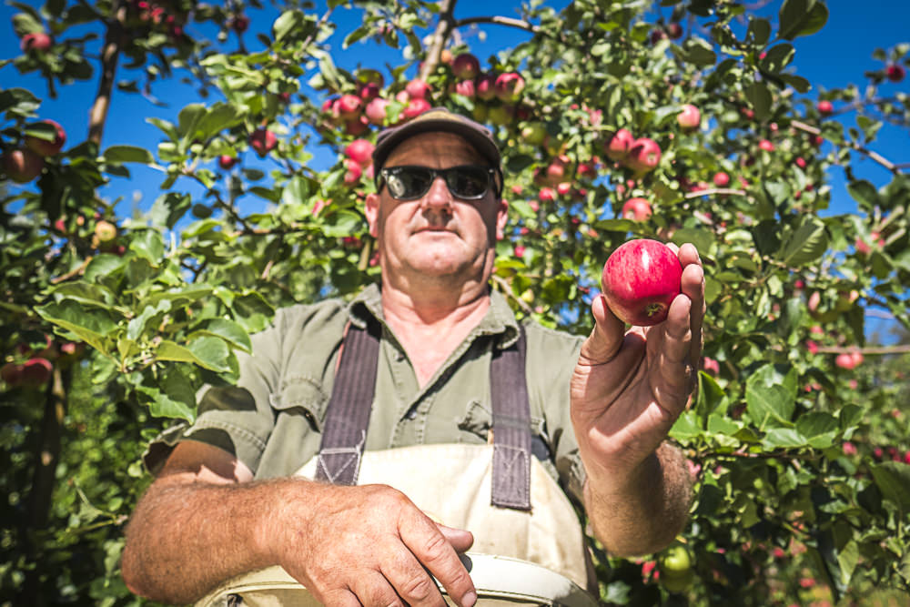 lobo-cider-apples-0415.jpg