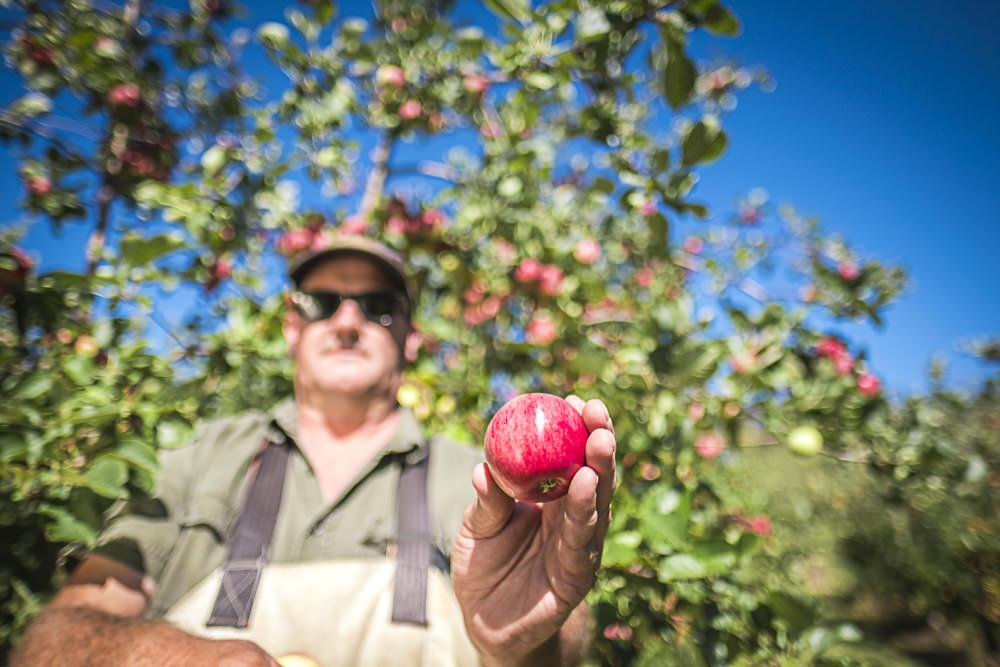 lobo-cider-apples-0416.jpg