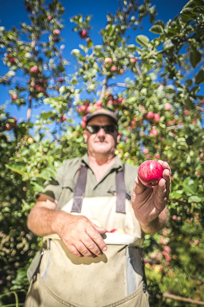 lobo-cider-apples-0417.jpg