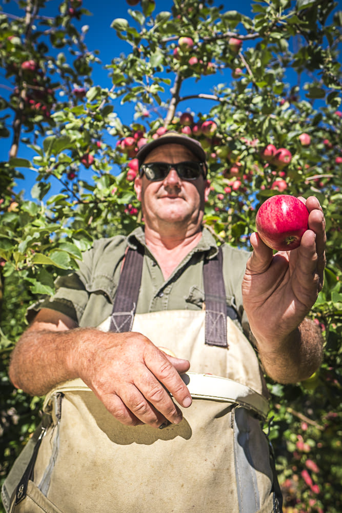 lobo-cider-apples-0421.jpg