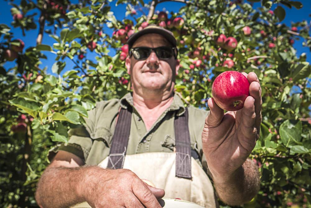 lobo-cider-apples-0422.jpg