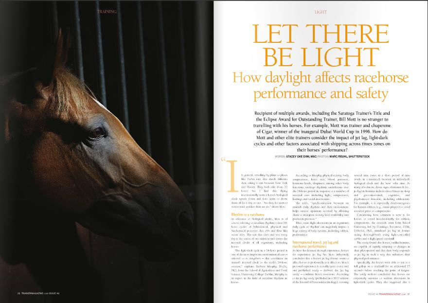 Horse_in_the_dark.jpg