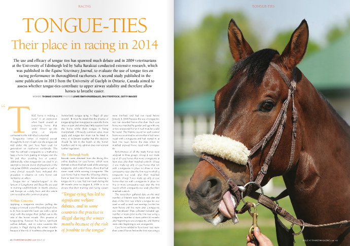 """TONGUE-TIES Their place in racing in 2014  The use and efficacy of tongue ties has spawned much debate and in 2009 veterinarians at the University of Edinburgh led by Safia Barakzai conducted extensive research, which was published in the Equine Veterinary Journal, to evaluate the use of tongue ties on racing performance in thoroughbred racehorses. A second study published in the same publication in 2013 from the University of Guelph in Ontario, Canada aimed to assess whether tongue-ties contribute to upper airway stability and therefore allow horses to breathe easier.  That horse is making a noise"""" is an expression when heard around an exercising horse that sends shivers up the spine of anyone connected to the individual concerned. Tongue-ties (strips of material passed through the horse's mouth over the tongue and tied under the jaw) have been used for generations on racehorses worldwide. The rider has utilized a tongue-tie as a method to keep a horse from putting its tongue over the bit and thus avoiding loss of control. Additionally, when tongue-ties are used in an attempt to prevent dorsal displacement of the soft palate (DDSP), anecdotal reports as well as some clinical research have indicated this procedure is effective on some horses and ineffective on others. Tongue ties or """"attache-langues"""" in the lexicon of Longchamp and Deauville are used in training establishments in North America and Europe on a daily basis and this article aims to explore this common practice.  Welfare Concerns  Applying a tongue-tie involves pulling the tongue as forward as possible and tying it close to its base around the lower jaw with a nylon strap with the tongue then pulled out to the side of the horse's mouth. This practice of tongue-tying, however, has led to significant welfare debates, and in some countries the practice is illegal during the winter months because of the risk of frostbite to the tongue. In Switzerland, tongue tying is illegal all year around. It must be stat"""