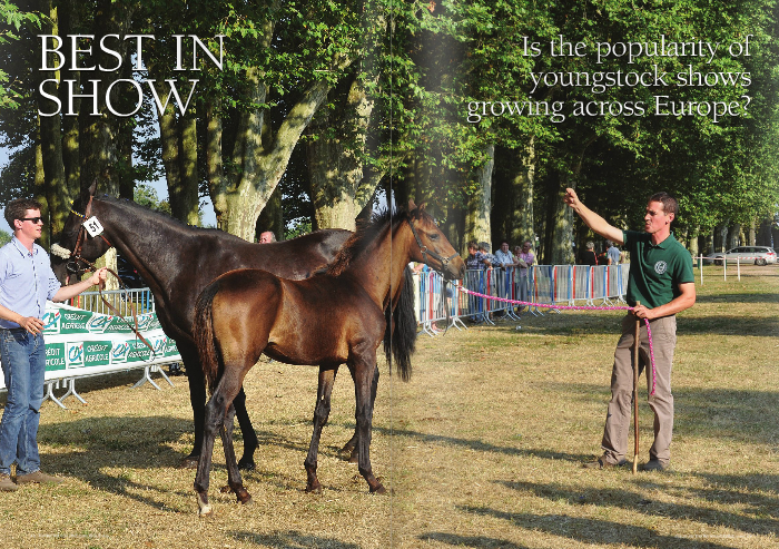 Is the popularity of youngstock shows growing across Euro  With the National Hunt market becoming ever more competitive and commercial, France have led the way with a concept to promote one of their most successful breeds, the Autre Que Pur Sang (AQPS) racehorse. Isn't it about time other countries followed  AQPS was only recognised as a breed in 2005, but long before then, the official association developed an ideas that has continued to grow year on year: the AQPS Show. This is a chance for breeders and purchasers to view France's finest foals and two year olds a unique opportunity to showcase the top AQPS youngstock and broodmares in an atmosphere more akin to a social occasion then the high pressured sales we are more used too. Lunch is often taken sitting under the shade of the trees and the conversation is about the latest trend in stallions, the appreciation of the quality of specimens being put forward, and the enjoyment that comes with being surrounded by like-minded AQPS fans.  Michel de Gigou founded the AQPS Stud Book. De Gigou insisted that the shows could help promote the breed internationally, his view being that if the breeders left their farms and showed their horses to a greater audience, the breed would grow.  From its origins at Chateaubriant the regional show moved to the prestigious Le Lion d'Angers Racecourse and now attracts over 80 foals and two-year-olds with the exception of yearlings. The current president of the West AQPS Association, Yann Poirier, considers that yearlings do not do themselves justice at this age.  With two key regional centres of AQPS breeding in France, one in Central-East, and one in the West, it made sense that two championships for these shows are held, one in Decize at the end of August and one at Le Lion d'Angers in the middle of September. The pre-selection shows start in early June with only the finest being put through. From small beginnings these shows now attract visitors from all over Europe and are judged b