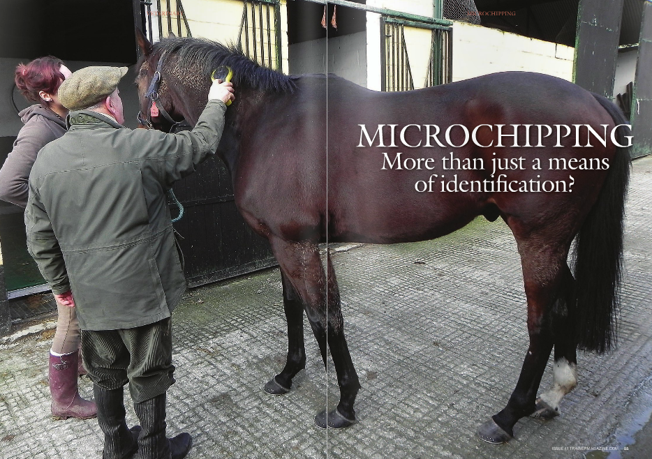 """N 2019, the first Thoroughbreds mandated by the Jockey Club to be microchipped will be eligible to race. Until then, racing commissions, racetracks, sales companies, transportation companies, veterinarians, breeding farms, and rescue organizations are exploring ways to use microchipping in their daily operations. Microchipping a horse is easy and inexpensive. The Jockey Club is providing microchips at no charge for foals of 2016 and later as part of the registration kit; microchips for Thoroughbreds born before 2016 are $10. Datamars Inc. in Woburn, MA, supplies microchips to the Jockey Club and offers its microchip reader for $249. (For more information, visit www.registry.jockeyclub. com and select """"Microchip FAQ"""" under the """"Registration"""" pull-down menu.) Implanting a microchip is designated as a veterinary procedure. The chip, which is the size of a grain of rice and contains a 15-digit identification number, is inserted into the nuchal ligament under the mane using a syringe-like device. The veterinarian's fee for the procedure is comparable to a routine vaccination and ideally should be done at the same time the foal's mane hairs are pulled for DNA typing and photographs are taken for registration. Microchip identification is virtually foolproof and tamperproof. Unlike tattoos, it doesn't fade over time, it can't be altered, and it doesn't require wrestling with a horse's lip to read it, only passing a microchip reader over the chip. Tampering with or switching microchips—a concern often expressed by horse owners—would require advanced surgical skills to make the correct incision and then hide evidence of the procedure using cosmetic surgery. """"The [nuchal ligament] is a very fibrous tissue and the microchip itself has a coating on it that incorporates into the tissue, so the tissue actually grows in and around it to hold it in place,"""" said Dr. Mike Cavey, a Lexington veterinarian who bred Nyquist's sire, champion Uncle Mo. """"So you would have to make an incision"""