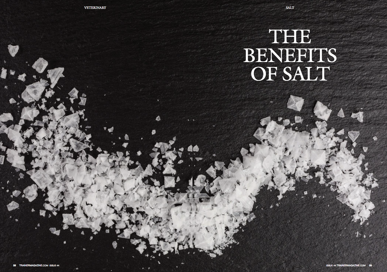 "The Vast and Varied Benefits of Salt for Racehorses    By: Stacey Oke, DVM, MSc       Anything and everything you need to know about the use of salt in horses       For being such a simple molecule—a mere ion of sodium joined with a single ion of chlorine to make sodium chloride (NaCl)—the crystalline chemical known as salt causes much confusion and prompts many questions. Why do horses need salt, and in what form? How often? Is the entire purpose of salt simply to help slake a horse's thirst and replenish sodium (Na), chloride (Cl), and other important electrolytes lost in sweat following exercise?        Based on years of research into feeding practices of domesticated horses, Kathleen Crandell, PhD, a nutritionist for Kentucky Equine Research located in Versailles, Kentucky, affirms that salt supplementation is indeed very important, but not always as straightforward as one might think.        ""Most forages destined for equine consumption have low levels of sodium and chloride. As such, equine nutritionists recommend supplementing all horses' diets with salt. The type, frequency, and amount will vary depending on the individual horse's work level and environmental conditions,"" advises Crandell.        The main focus of this article pertains to the importance of salt in equine diets and ways to provide appropriate amounts either using salt granules or blocks/licks, or electrolytes in the form of water-soluble powders or pastes. In addition, ""other"" uses of salt in Thoroughbreds, including medicinal uses such as salt therapy (salt rooms) and salted aqua trainers, are addressed.         Why Horses Need Salt       Unlike animals living in oceans that need to continually excrete excess salt, land mammals like horses have the complete opposite problem: they must obtain and maintain sufficient quantities of Na from their diets to support bodily processes.       Working in concert, the adrenal glands (located above the kidneys), liver, lungs, and kidneys all play key roles in conserving water, Na and Cl. Using several hormones and enzyme systems, referred to as the ""aldosterone-renin-angiotensin system,"" the kidneys receive signals to either excrete or reabsorb Na, Cl, and water in exchange for potassium (K) to maintain appropriate levels of all these electrolytes within the body.       Sodium is distributed amongst almost all organs and fluids. High levels of Na exist in skeletal tissues (about 50% of the body's total Na), blood, muscle (11%), skin (8.5%), and internal organs (2%). In addition, approximately 12% of the body's Na is found within ingesta located in the gastrointestinal tract. This serves as an effective reservoir for Na, especially in athletic horses.       ""In times of need, horses absorb sodium from the intestinal contents to replenish those lost in sweat,"" Crandell explains. ""Sodium is readily absorbed from the gastrointestinal tract, meaning that more than 90% of ingested Na is available for the body to use.""        Sodium is required for a wide array of body systems to function. Among the most important are the central nervous and muscular systems. Specifically, nerves require Na to stimulate skeletal muscles to contract.        Current Salt Intake Recommendations       While some horses don't seem particularly interested in their licks, other horses actively go out of their way to find salt, licking anything and everything they can get their tongues on to fill some apparent void. Sweat-covered tool handles or wooden blocks that historically held salt blocks frequently become prey to a horse's oral cavity, slowly licked or chewed to shreds in situations involving Na deprivation. Ultimately, every horse has unique tastes and flavor preferences, and their salt needs can vary dramatically.       According to the National Research Council's (NRC) Nutrient Requirements of Horses, sixth edition, horses consume anywhere from 0 to 62mg of salt/kg bodyweight a day when offered a free-choice salt block.        ""For an average 500kg horse, the NRC recommends offering 25g of NaCl daily,"" notes Crandell. ""Horses receiving commercial concentrate feeds will get a portion of that requirement from the feeds, as nearly every concentrate contains some salt.""       Classic ways of supplementing salt include:       Simple NaCl granules, such as table salt or ""loose salt,"" top dressed on feed (concentrates) or offered free-choice in a mineral feeder;    Free-choice salt licks/blocks;    Free-choice mineral licks/blocks (the colored mineral blocks), which in addition to Na and Cl, can include other minerals like iron and iodine (red block) or copper, zinc, and manganese (brown blocks). However, mineral levels in red and brown blocks are usually too low to meet a horse's total requirement for ""other"" minerals but normally quite sufficient for salt.        Specially formulated electrolyte supplements for horses, available as powders or pastes, can be added to the feed, dissolved in water, or dosed with a paste. The first ingredient of a good electrolyte will be salt (NaCl), so some owners/trainers prefer to either give electrolytes daily in place of salt or supplement only when the horse has been sweating to replace the lost electrolytes.        ""Electrolyte pastes are good for when a horse is in need of quick electrolyte replacement,"" Crandell advises.          Tailoring Salt Intake to the Task at hand       While the NRC recommends approximately 25g of NaCl per horse daily, the exact amount of salt offered depends on the individual horse, its level of athleticism and fitness, and environmental conditions.       ""Daily salt supplementation is particularly important for horses involved in heavy or prolonged exercise to replace the major electrolytes, Na and Cl, lost in the sweat,"" Crandell notes, ""Salt supplements can also be used to encourage drinking water for appropriate hydration.""        Horses adapted to exercise excrete less Na than untrained horses. In humid environments, however, and with prolonged exercise, more NaCl-laden sweat is produced, necessitating additional supplementation after exercise to replace these losses. For example, horses training in more northern climates suddenly moved to a humid, warmer environment will likely require additional NaCl following exercise.         According to the NRC, ""Because of limited data on specific requirements for sodium and the influence of activity, adaptation, and environment on animal needs, precise recommendations cannot be made.""       They did note, however, that intensely exercising horses in a hot climate likely meet their Na demands when trainers add 0.9% salt to the diet—equivalent to 90 grams per day for a 500kg horse consuming 10kg of feed per day. While this may seem like a lot of salt, consider that endurance horses may consume up to 180 grams of salt in the course of a 160 km race.       A more precise method of determining salt requirements described by the NRC involves measuring weight loss as an estimate of sweat loss. Sweat contains 2.8g NaCl per liter, prompting experts to suggest offering 3.1g of Na for each kilogram of bodyweight lost during exercise to replenish lost NaCl.        What If I Don't Supplement?       Feral horses clearly don't randomly happen upon salt blocks mysteriously appearing in their range like elaborate crop circles created by nocturnal aliens. So is Na supplementation really necessary?       ""It isn't until the 1800s that books devoted to feeding horses finally make mention of adding salt to horses' diets other than mixing it with wine and rubbing it on the gums to stimulate a horse to drink. It is possible that caretakers of domesticated horses did not realize the benefit of salt in the diet, or that up until the 1800s authors just did not think salt merited mentioning,"" Crandell explains.       That said, some authors of texts that Crandell has studied did make reference to feeding horses dirt or letting them get their daily dose of dirt when they are turned out.        ""I assume that horses not offered supplemental salt seek out salt deposits in soil, which is where it seems that feral horses obtain dietary salt. In the wild, however, ingesting salt from soil deposits would probably not occur on a daily basis,"" suggests Crandell.       John Stewart made several recommendations for the use of salt in his book Stable Economy: A Treatise on the Management of Horses (1860) regarding hay, including salted hay, which is hay mingled with salt at the time of stacking.        Stewart wrote, ""The principle motive for salting hay is to preserve it when the weather requires that it be stacked before it is sufficiently dry, horses are said to prefer it to any other."" He also wrote, ""Salt, I think, should not be forced on the horse. It may excite too much thirst. Given apart from the food, he may take all that is good for him.""       According to Crandell, by the 1900s, references to salt supplementation were widespread. In The Way of a Man with a Horse (1929). Lieutenant-Colonel Geoffrey Brook advised, ""All horses should have rock salt in their mangers, and 1 oz. in their boiled feeds or mashes. Salt promotes the digestion and aids in building up tissue.""       Horace Hayes in Stable Management and Exercise (1900) wrote, ""The bad reputation which wheat has in England as a producer of colic and laminitis, is chiefly due to ignorance of the proper way to prepare it for a horse to eat. A couple of pounds of boiled wheat, in which a little salt has been mixed, form an agreeable repast for a horse at night when soft food is required."" Hayes' advice on making a proper bran mash was to add ""…about 3 lbs. of bran with an ounce of salt, and pour in as much boiling water as the bran will take up.""       To help horses drink, Indian author Rangin wrote, ""After returning from furlough and before showing a horse at darbār a sawar gives the following: dry ginger, black mustard seed, salt, ajwāin or ajova seeds. One ounce of each is powdered, mixed in ātā and given at bed-time. The horse will drink deeply in the morning.""       A Dab too Much, a Drop too Little?       Wondering when to say ""Whoa, whoa!"" like a parent watching their child pour milk on their morning cereal? Generally speaking, offering a bit too much salt isn't problematic.       ""Being water soluble, excess salt generally gets excreted by the body, largely without harm or foul as long as there is water to drink. In terms of palatability, horses generally don't tolerate NaCl in a very high concentration in their feed, usually no more than 1.5% before they start refusing it. That would be equivalent to 15g of salt in every kilogram of feed,"" shares Crandell.  ""That is why feed manufacturers usually recommend offering salt free-choice alongside a concentrate.""       That said, reports exist describing either the development or exacerbation of gastric ulcers with repeated administration of electrolyte solutions.        ""Because gastric ulcers pose health and performance problems for athletic horses, including Thoroughbred racehorses, appropriate supplementation and attention to gastric protection should be embraced,"" advises Crandell. ""Similarly, endurance horses are particularly at risk with the high intakes of electrolytes they receive, especially during a competition.""       Researchers from Germany recently reported that in addition to gastric ulceration, high levels of NaCl (100 g) to moderately exercising horses daily for two weeks results in a mild metabolic acidosis. This means that the pH (acidity) of the blood decreases, becoming more acidic, which negatively impacts the excretion of other minerals and electrolytes, including calcium. The full text of this article is available for free at https://www.ncbi.nlm.nih.gov/pmc/articles/PMC5207637/.       Rarely, psychogenic salt consumption occurs. In such cases, horses voluntarily ingest excessive Na and, not surprisingly, drink and urinate more frequently. If you are concerned your horse is drinking and urinating more than normal (e.g., compared to previous levels or herd mates), it is important to consult with your veterinarian. They will help rule out other causes of excessive thirst and urination, including diabetes (mellitus or insipidus), Cushing's disease, and Addison's disease.         ""Classic signs of sodium deficiency include dehydration, incoordination of skeletal muscles, including chewing abnormalities, and an unsteady gait,"" shares Crandell.        In addition, the concomitant decrease in feed and water intake also causes weight loss.       Other Uses for the Salts in Horses       Wounds/Abscesses       Salt is widely touted as having natural anti-inflammatory and antibacterial properties that help fight infection. For example, salt dissolved in water can be packed into or placed on wounds and abscesses to help fight infection.       The Merck Veterinary Manual describes using Epsom salt to help manage sole punctures or abscesses. In this case, however, it's important to note that Epsom salt isn't actually NaCl or any type of salt but rather a mineral compound containing magnesium sulfate.       Recent research in human medicine tends to support the use of salt for various types of wounds, especially considering the surge in human patients preferring to use natural and alternative therapies first rather than jumping directly to pharmaceutical drugs (an approach increasingly mirrored throughout the equine industry). For example, a 2017 study published in the journal Wounds found that topic administration of a sea salt-based spray to human patients with diabetic foot ulcers was beneficial.        Medications       Several pharmaceutical drugs used in horses come as salts, which help stabilize the medication. Ceftiofur sodium (Naxcel) and ceftiofur crystalline free acid (Excede) can be used in horses. Both medications include the same basic drug used to treat the same infections but are dosed much differently because of their unique preparations (salt versus crystalline free acid). Excede, for example, treats respiratory tract infections in just two doses, whereas Naxcel is licenced for the same respiratory diseases but is administered daily for up to consecutive 10 days.        Another interesting example of how different formulations impact dosing involves glucosamine, commonly found in various joint supplements. Some supplements contain glucosamine hydrochloride (HCl) and others contain glucosamine sulfate. Both products dissolve in fluid in the gastrointestinal tract to generate ""glucosamine free base"" (GFB) that is available for absorption. However, the HCl form produces more GFB than the sulfate form. This means that if two supplements contain 1000mg of glucosamine but one has 1000mg of glucosamine HCl and the other has 1000mg glucosamine sulfate, 830g of GFB from the HCl product is available for absorption, whereas only 600g of GFB is available for absorption from the sulfate product. This doesn't mean that a product containing the sulfate form is inferior; it simply shows that not all salts are equal.       Salt therapy (Salt Rooms)       Salt rooms are exactly what they sound like: rooms or modified stalls/boxes that have salt either pumped into the air or caked onto the walls and floors. In either design, aerosolized salt directly contacts the horse's skin while simultaneously being inhaled. This therapy mimics salt caves that were once a haven for people with various respiratory afflictions, including asthma and chronic obstructive pulmonary disease (COPD), equivalent to heaves in horses.       Using salt therapy as a natural, non-invasive method of managing skin and respiratory issues is not new, but interest in, and availability of, salt therapy has only recently surged in the equine industry. Now, several therapy facilities offer services around the world, and some horse-rich regions even have mobile therapy units relatively readily available.        According to companies offering salt therapy, the benefits for Thoroughbreds are:    • Suffering from respiratory conditions, including lower airway disease (e.g., inflammatory airway disease that is common in young, racing Thoroughbreds);    • With skin conditions, such as rashes, boils, dermatitis, mud fever, and ringworm;    • By facilitating recovery following training or racing (presumably by replacing lost electrolytes during exercise); and,    • Through performance-enhancing mechanisms when used prior to competing.       Like many alternative and complementary therapies used in horses, the million dollar questions are: does this work and if so, how?        To date, no studies on salt therapy in horses have been published. Even in the human literature, very few controlled studies exist. Recently, a team of scientists reviewed the available literature on salt therapy for patients with COPD (one of the most common indications of salt therapy). In their study, published in the February 2014 edition of the International Journal of Chronic Obstructive Pulmonary Disease the authors wrote, ""From this review, recommendations for inclusion of salt therapy as a therapy for COPD cannot be made at this point and there is a need for high quality studies to determine the effectiveness of this therapy.""       In response to public-generated interest, Dr. Norman Edelman, the senior scientific advisor for the American Lung Association, contributed to a statement on the use of salt therapy. Based on his musings, there does seem to be scientific validity to the therapy. Edelman wrote, ""When fine salt particles are inhaled, they will fall on the airway linings and draw water into the airway, thinning the mucous…. Also, these environments are allergen-free and thus good for people with allergies affecting their lungs.""       He also pointed out, however, that there are no evidence-based findings to create guidelines for patients and clinicians about treatments such as salt therapy, and he questioned how well maintained the rooms are. The concern was that bacteria could grow in unmaintained rooms, potentially exacerbating skin and respiratory conditions.        In summary, the American Lung Association's final verdict was that salt therapy should be discussed with a medical professional—in our case, a veterinarian.       Aqua Trainers       Much like salt rooms that create an ocean beachfront feel, aqua trainers can produce a similar environment. In addition to the standard benefits of a water treadmill (e.g., conditioning, rehabilitation, etc.), the salt can aerosolize, potentially benefiting the respiratory tract and skin.        Concluding Remarks: Use Salt with a Grain of Salt     Regardless of whether you are seeking salt for daily supplementation, electrolyte replacement, wound management, respiratory health, or other reasons, there clearly remains a great deal to learn. As always, consult with your veterinarian prior to any change in diet or supplement strategy, and choose products manufactured by reputable companies. Quality supplements are more likely to contain the type and amount of ingredient listed on the label and be free from contaminations, including illegal substances that could hypothetically generate a positive drug test (believe me, it's happened!). Many respiratory and skin conditions require veterinary intervention; therefore, salt therapy and aqua trainers should only be explored after your horse has been examined by a qualified individual."