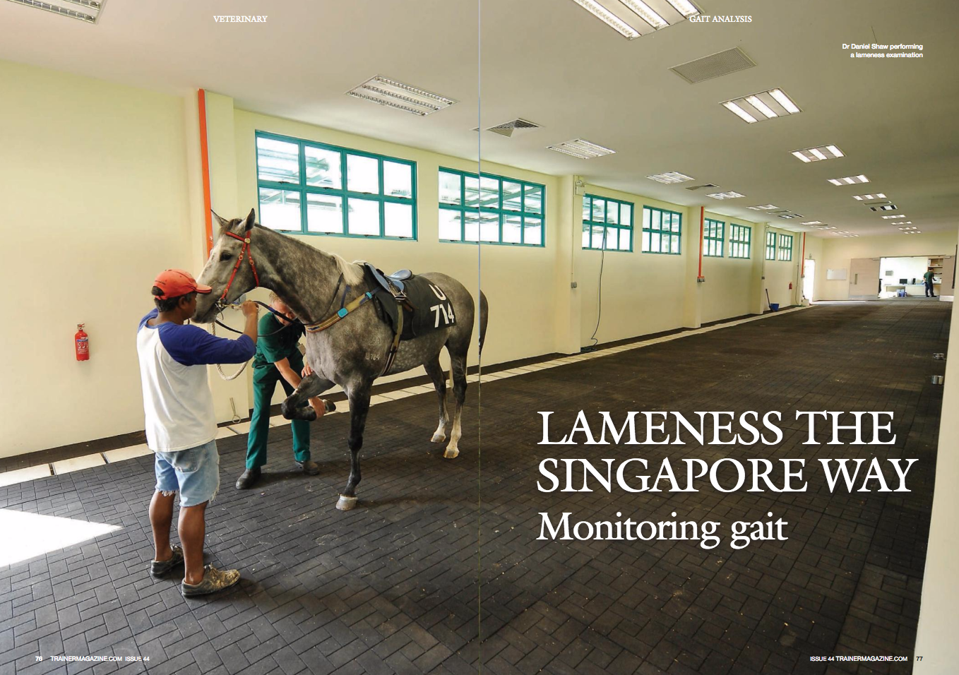Lameness the Singapore way: HBLB study investigates the potentials of long-term monitoring of gait in racing Thoroughbreds    << HBLB logo near here>>      Because I was born under a lucky star, I was offered the sensational opportunity to conduct a two-year long study in the beautiful, hyper-efficient, and very hot island of Singapore. The study 'Early detection of musculoskeletal injury in the Thoroughbred through monitoring of movement symmetry' started in November, 2014, and is funded by the Horserace Betting Levy Board (HBLB), and it was designed by Dr. Thilo Pfau together with professors Renate Weller and Kristien Verheyen from the Royal Veterinary College in London.    Traditional veterinary evaluation of lameness is subjective. Objective tools to document and measure specific forms of lameness and changes in gait are needed and will allow horses to be evaluated more consistently over time, looking for patterns of lameness developing during training. It may also be possible to predict specific sites of injury or pain based on the patterns observed with gait analysis.     The idea behind this HBLB project was simple: follow as many Thoroughbreds in training as possible on a monthly basis for a year and a half, tracking their soundness with a sensor-based gait assessment device at the Singapore Turf Club (STC), then correlate their medical history and their soundness/lameness in an attempt to determine which of the many gait parameters that are measured by the gait analysis system could be used to detect musculoskeletal injuries, ideally before they become clinically apparent.    The venue (Fig.1)    The Singapore Turf Club is a modern racetrack with an all-weather surface and a turf track. The horses that regularly race there are stabled around it by the different trainers in similar stable blocks and are treated by the same vets at the STC veterinary clinic. Horses coming in and leaving the STC undergo stringent quarantine and veterinary checkups. Most HBLB-f