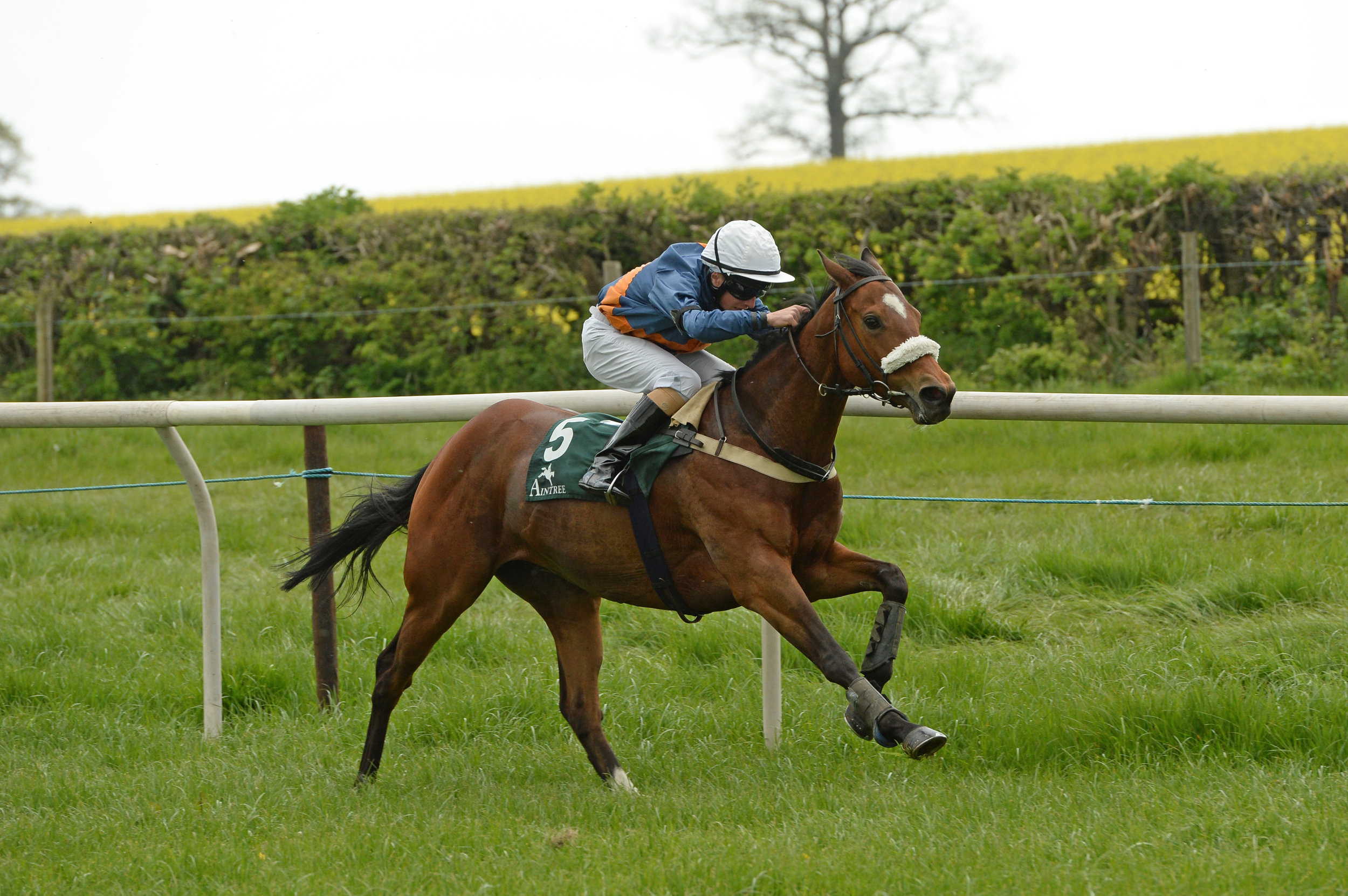 2015 Champion Apprentice, Tom Marquand, started his career pony racing.JPG