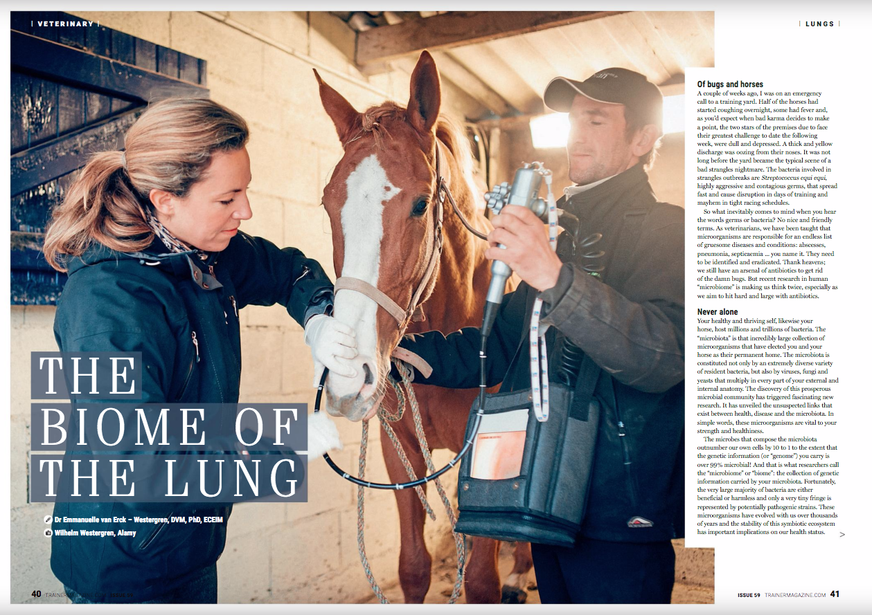 """The Biome of the lung      Dr Emmanuelle van Erck – Westergren    DVM, PhD, ECEIM    Equine Sports Medicine Practice (www.esmp.be)      Of bugs and horses    A couple of weeks ago, I was on an emergency call to a training yard. Half of the horses had started coughing overnight, some had fever and, as you'd expect when bad karma decides to make a point, the two stars of the premises due to face their greatest challenge to date the following week, were dull and depressed. A thick and yellow discharge was oozing from their noses. It was not long before the yard became the typical scene of a bad strangles nightmare. The bacteria involved in strangles outbreaks are Streptococcus equi equi, highly aggressive and contagious germs, that spread fast and cause disruption in days of training and mayhem in tight racing schedules.      So what inevitably comes to mind when you hear the words germs or bacteria? No nice and friendly terms. As veterinarians, we have been taught that microorganisms are responsible for an endless list of gruesome diseases and conditions: abscesses, pneumonia, septicaemia ... you name it. They need to be identified and eradicated. Thank heavens; we still have an arsenal of antibiotics to get rid of the damn bugs. But recent research in human """"microbiome"""" is making us think twice, especially as we aim to hit hard and large with antibiotics.      Never alone    Your healthy and thriving self, likewise your horse, host millions and trillions of bacteria. The """"microbiota"""" is that incredibly large collection of microorganisms that have elected you and your horse as their permanent home. The microbiota is constituted not only by an extremely diverse variety of resident bacteria, but also by viruses, fungi and yeasts that multiply in every part of your external and internal anatomy. The discovery of this prosperous microbial community has triggered fascinating new research. It has unveiled the unsuspected links that exist between health, disease and the micr"""