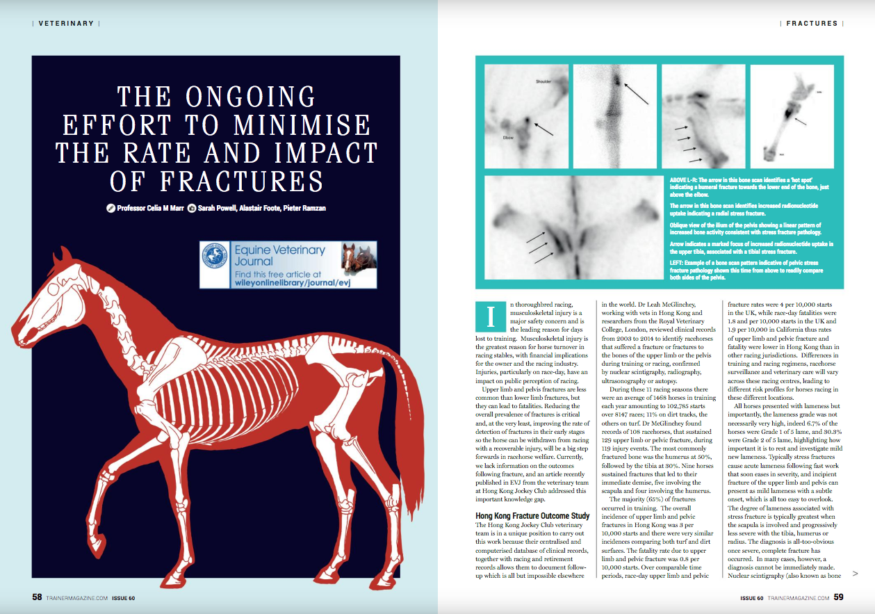 """In thoroughbred racing, musculoskeletal injury is a major safety concern and is the leading reason for days lost to training. Musculoskeletal injury is the greatest reason for horse turnover in racing stables, with financial implications for the owner and the racing industry. Injuries, particularly on race day, have an impact on public perception of racing.     Upper limb and pelvis fractures are less common than lower limb fractures, but they can lead to fatalities. Reducing the overall prevalence of fractures is critical and, at the very least, improving the rate of detection of fractures in their early stages so the horse can be withdrawn from racing with a recoverable injury will be a big step forwards in racehorse welfare. Currently, we lack information on the outcomes following fracture, and an article recently published in the Equine Veterinary Journal (EVJ) from the veterinary team at the Hong Kong Jockey Club (HKJC) addressed this important knowledge gap.       Hong Kong Fracture Outcome Study     The HKJC veterinary team is in a unique position to carry out this work because their centralised and computerised database of clinical records, together with racing and retirement records, allows them to document follow-up, which is all but impossible elsewhere in the world. Dr Leah McGlinchey, working with vets in Hong Kong and researchers from the Royal Veterinary College, London, reviewed clinical records from 2003 to 2014 to identify racehorses that suffered a fracture or fractures to the bones of the upper limb or the pelvis during training or racing, confirmed by nuclear scintigraphy, radiography, ultrasonography, or autopsy.       <<Figures """"Humerus BS"""", """"Radius BM"""", """"Pelvis BSa"""", """"Pelvis BSb"""", & """"Tibia BS""""near here>>       During these 11 racing seasons there were an average of 1468 horses in training each year, amounting to 102,785 starts over 8147 races, with 11% on dirt tracks and the rest on turf. Dr McGlinchey found records of 108 racehorses that sus"""