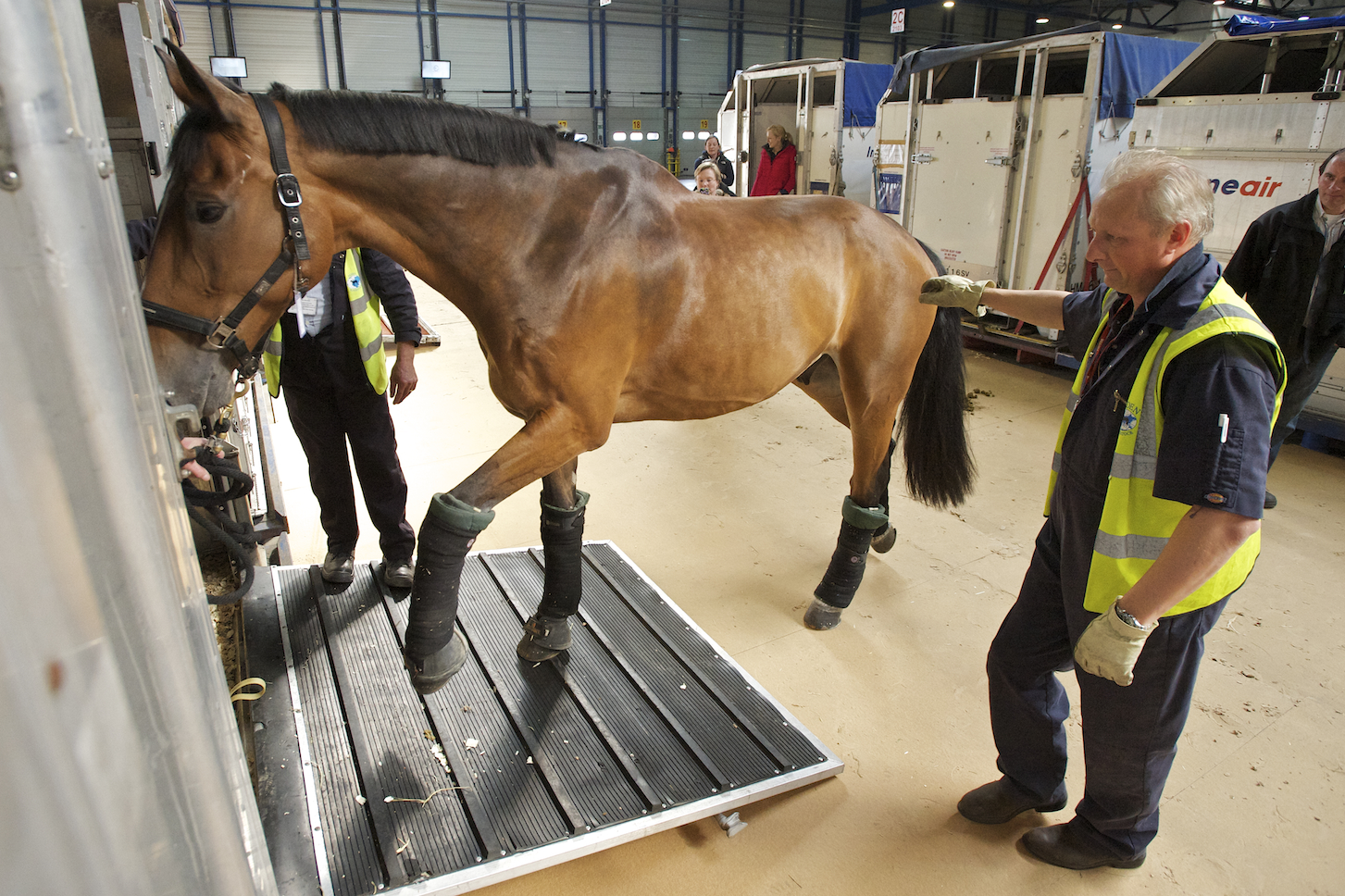 International travel of horses means the virus can spread readily from one country to another.