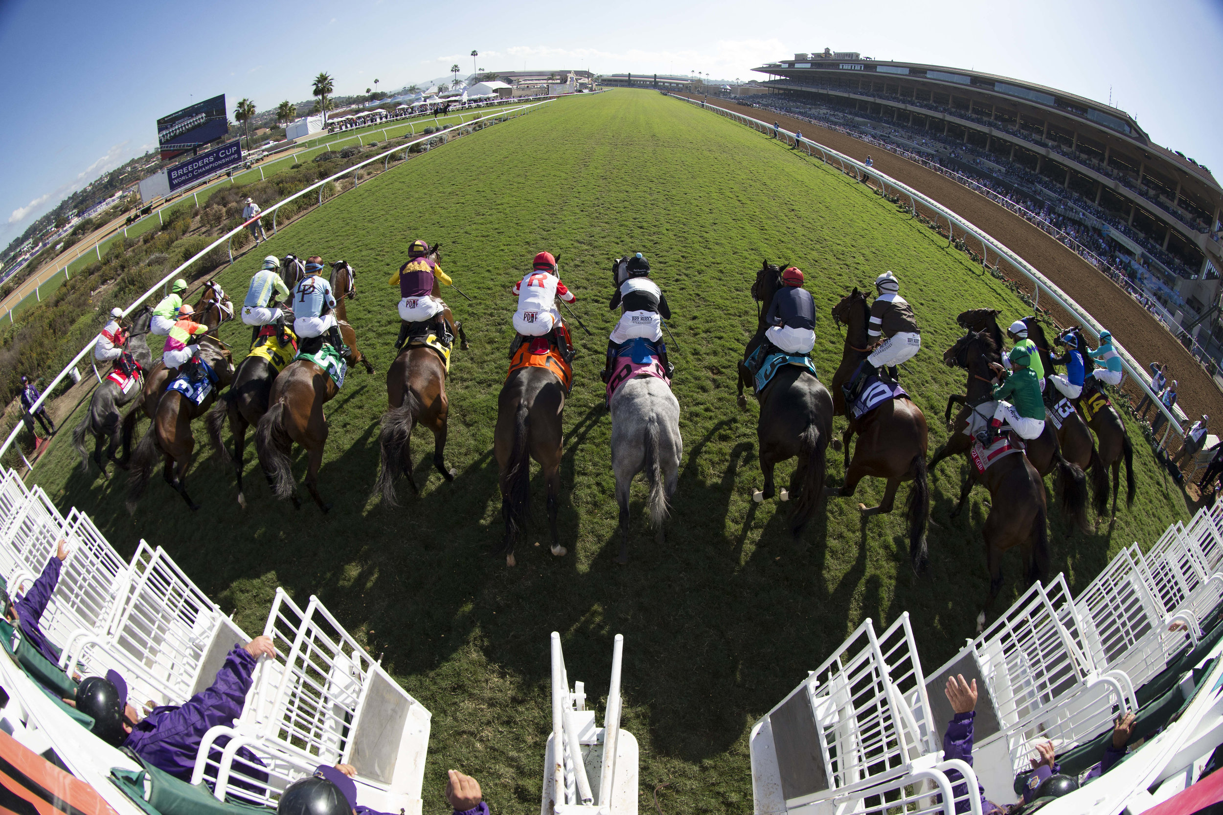 DEL MAR, CA - NOVEMBER 04: Horses start the Goldikova Stakes on Day 2 of the 2017 Breeders' Cup World Championships at Del Mar Racing Club on November 4, 2017 in Del Mar, California. (Photo by Michael McInally/Eclipse Sportswire/Breeders Cup/