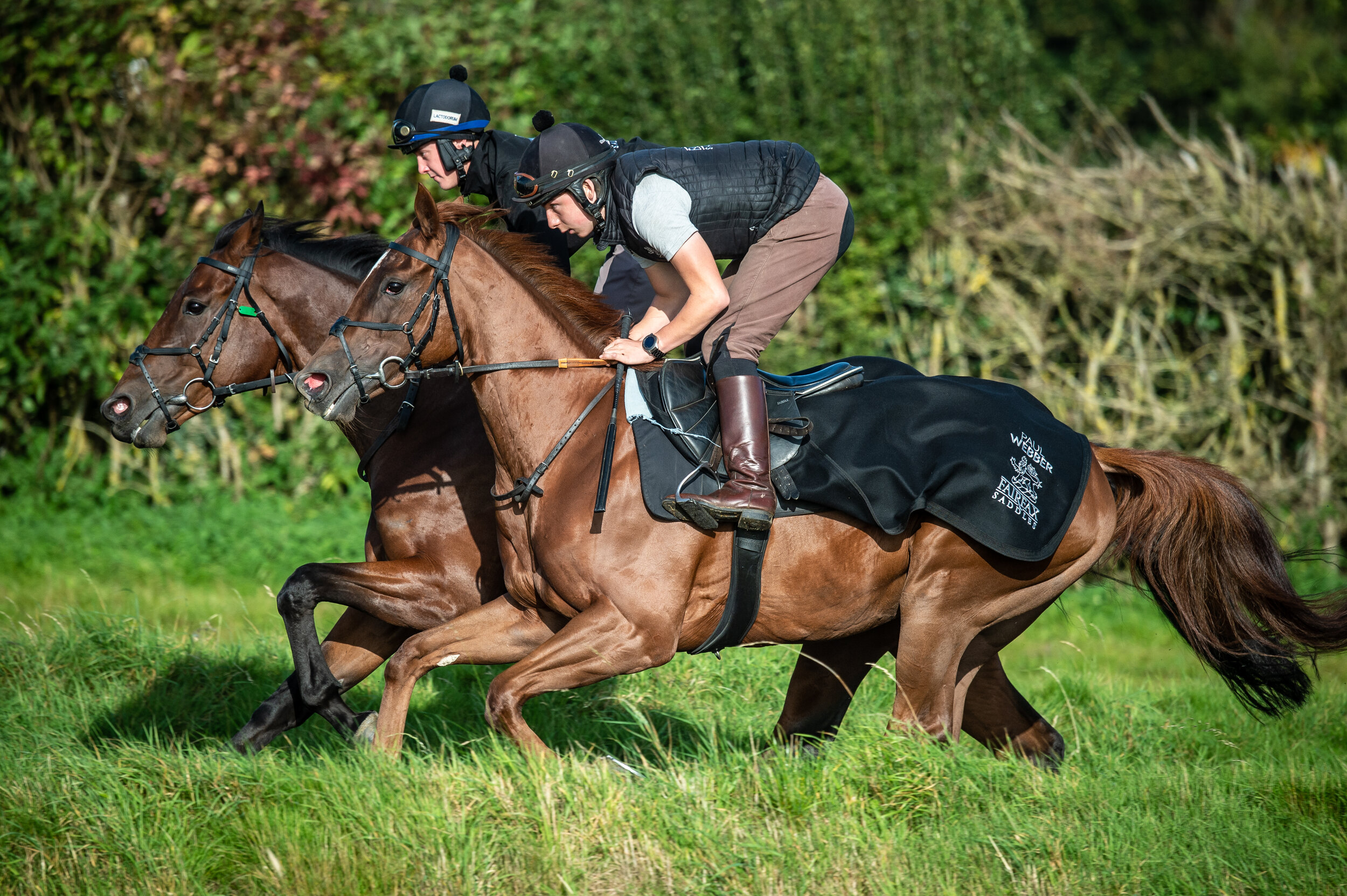 Saddle + Half Pads - The effect on race saddle pressures and gallop kinematics