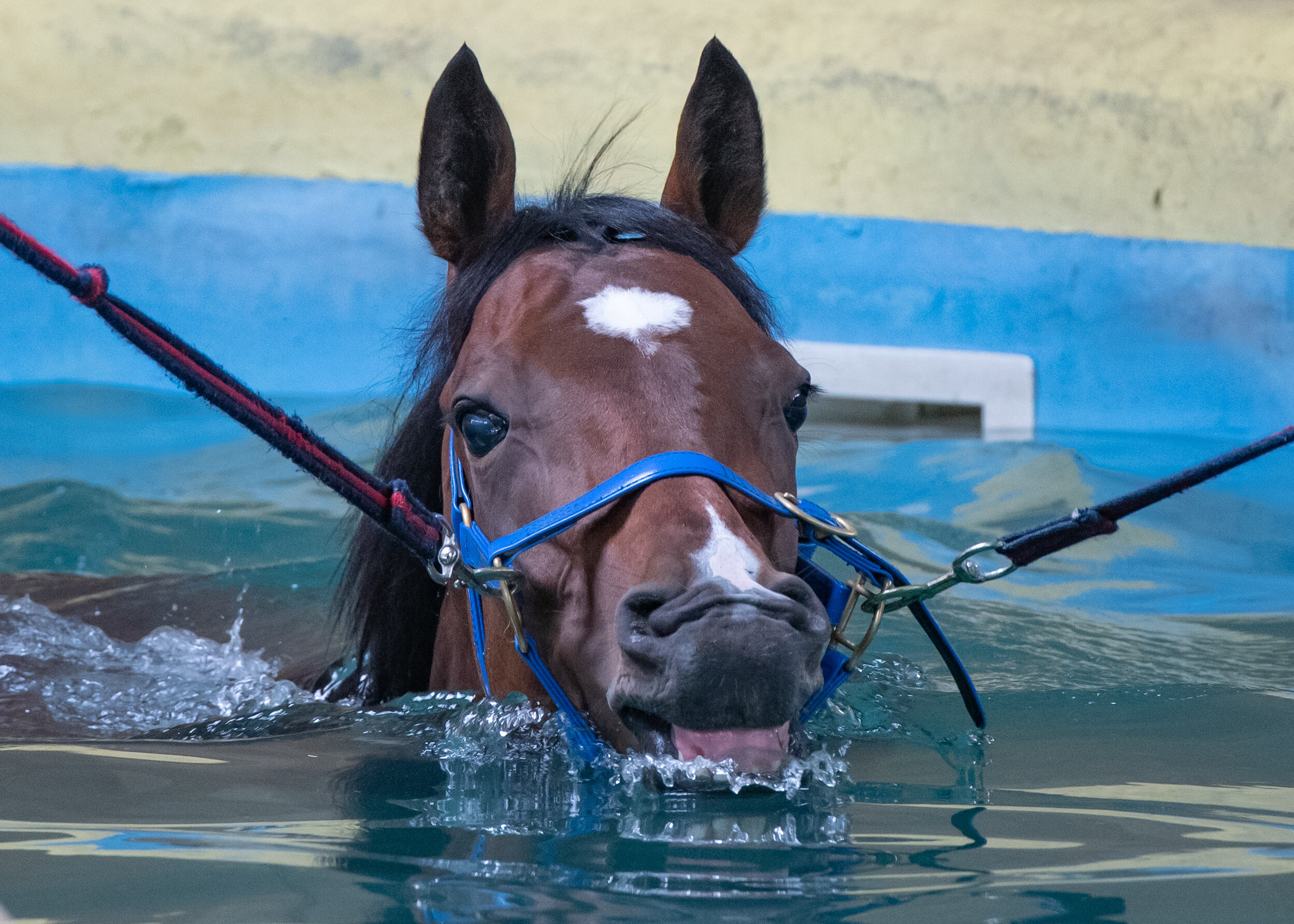 Hydrotherapy for performance - the benefits of water based conditioning - hydrotherapy as a mechanism for enhancing performance in the racehorse