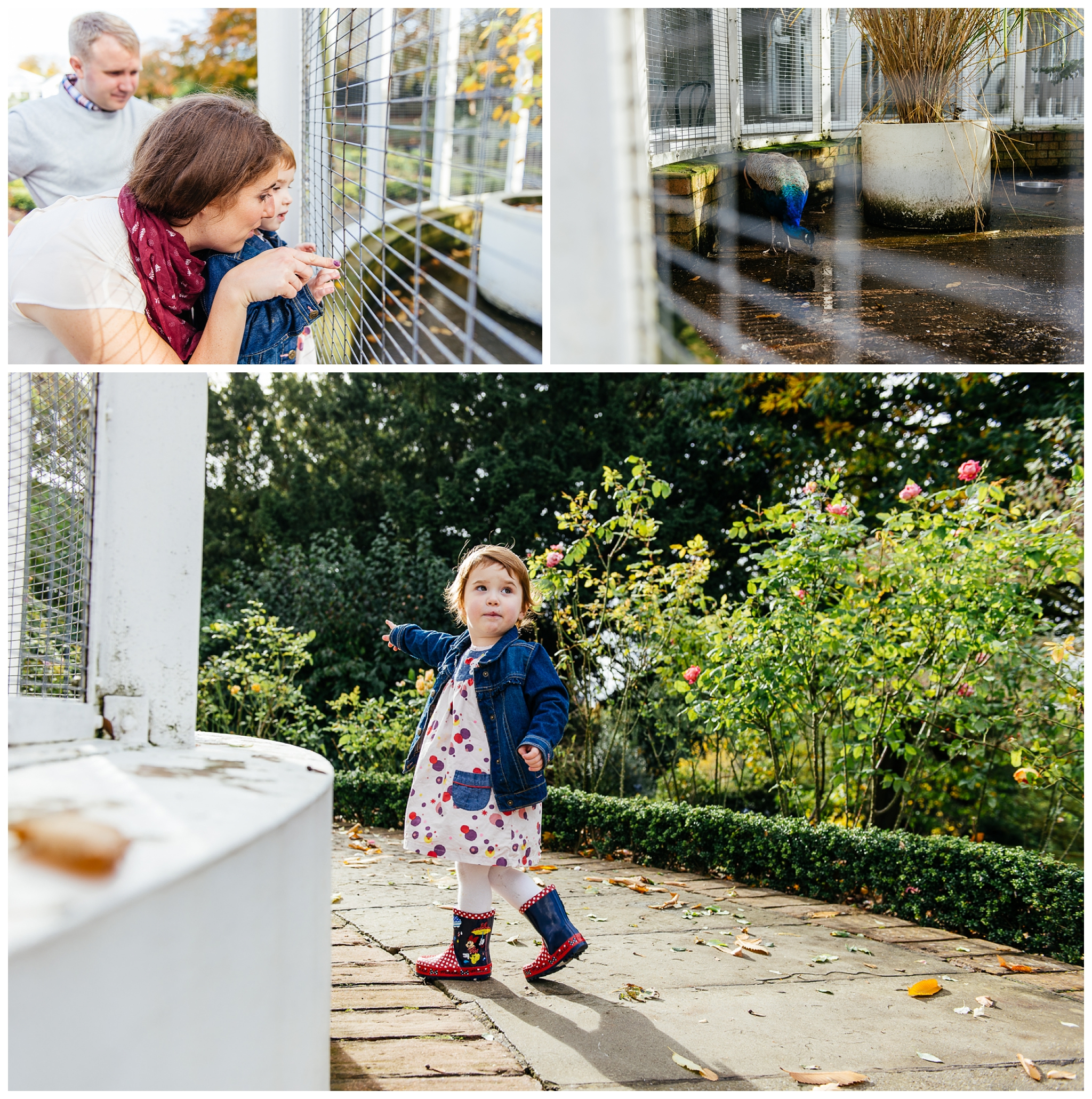 Autumn-family-portraits-birmingham-photographer_0028.jpg