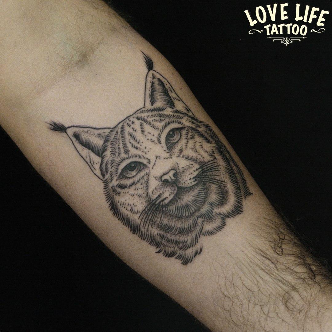 татуировка рыси