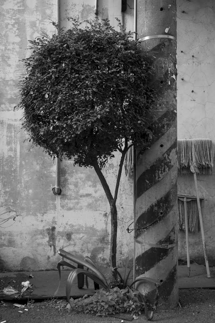 I photograph trees