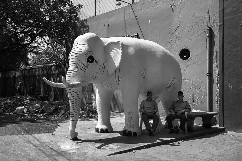 Hello from under the elephant of bureaucracy