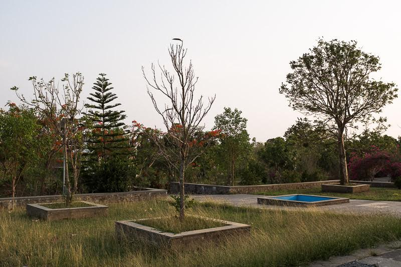 Our trees await monsoon