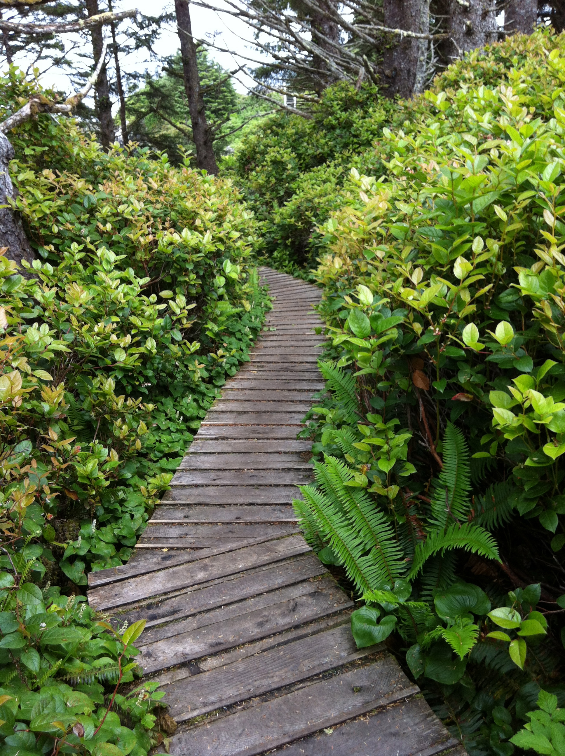 Walking beside salal and ferns near Pacific Sands Resort on Cox Bay.