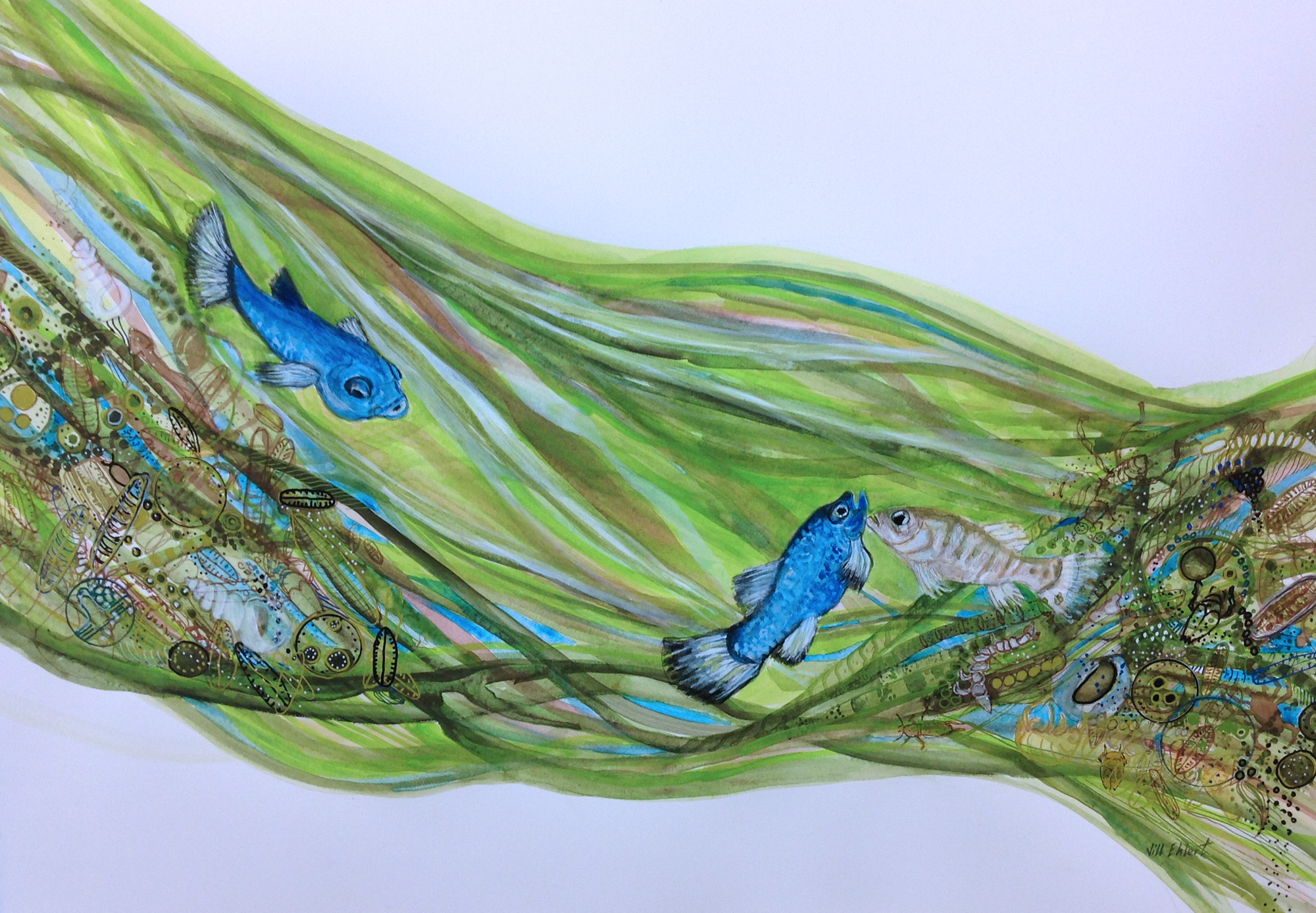 Watercolour, pencil crayon, walnut and acrylic inks on Arches Watercolour paper.    Jill Ehlert