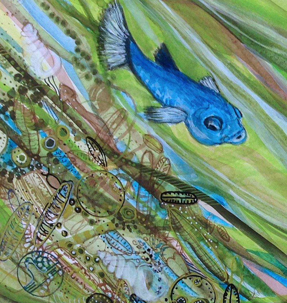 Devils Hole pupfish detail.jpg
