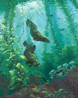 """Mark Hobson """"Sea Otters Return"""""""