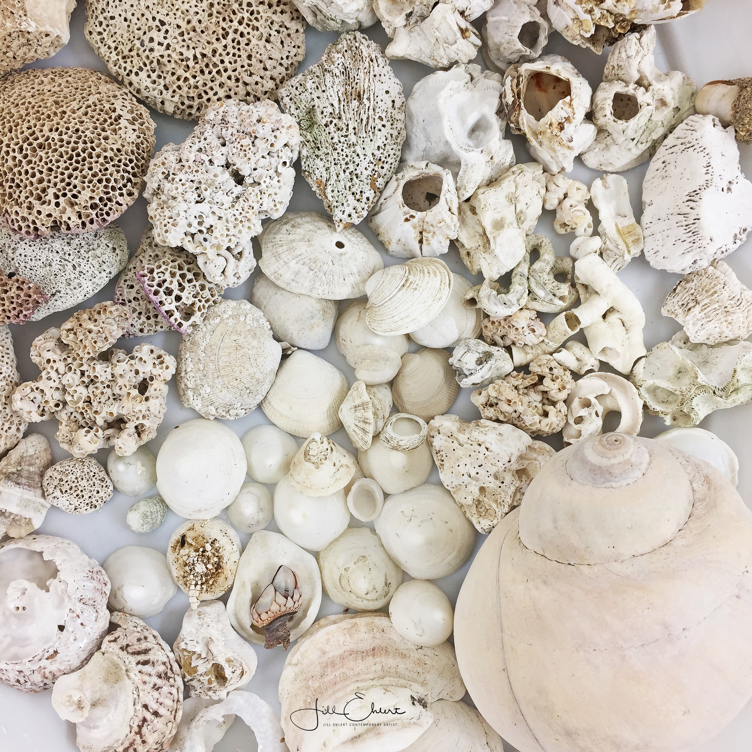Shell collection_5.jpg