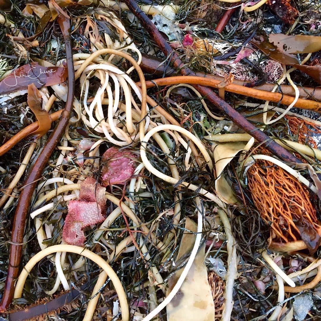 Seaweed_cluster_1.jpg