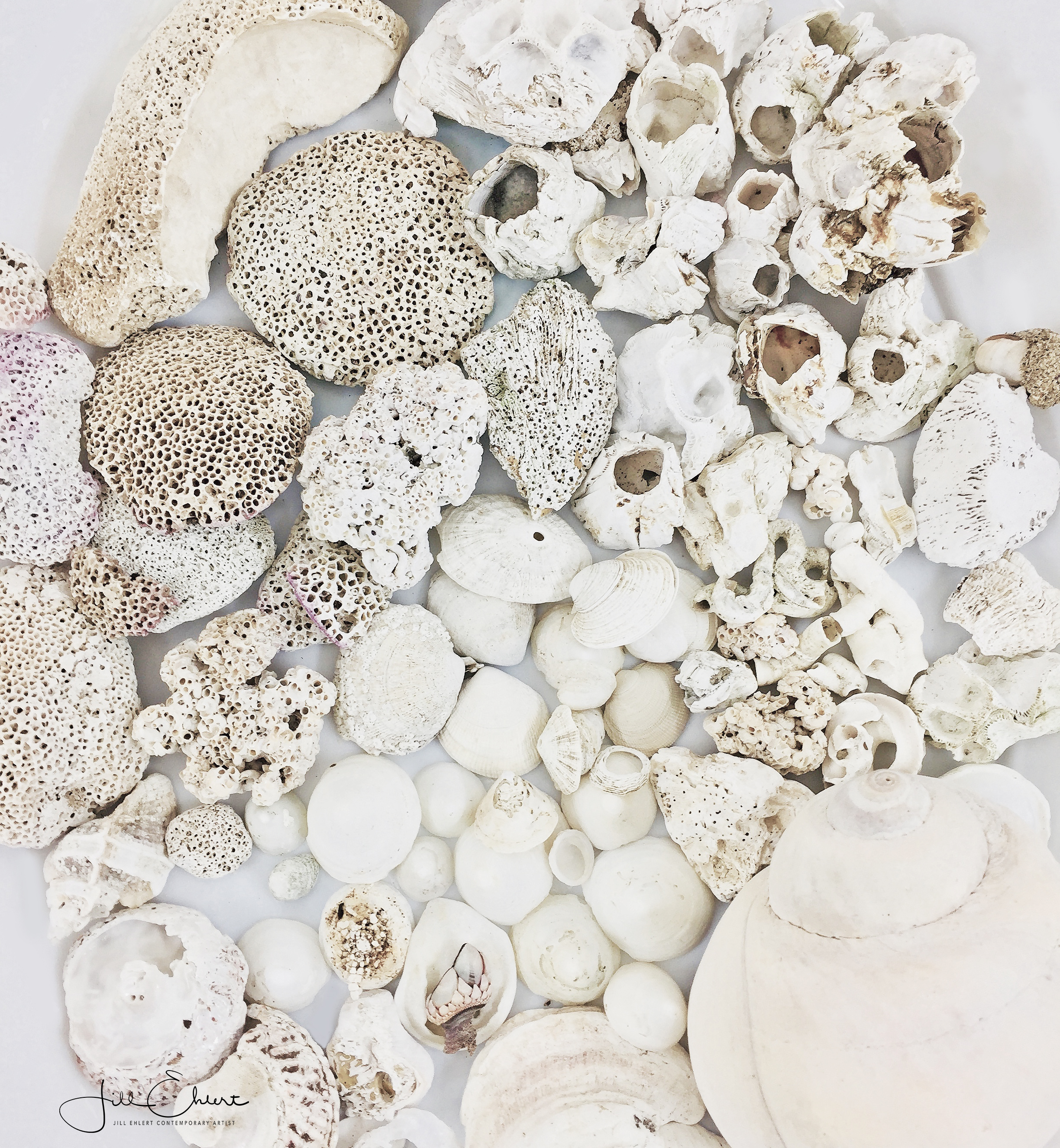 Shell collection_4.jpg
