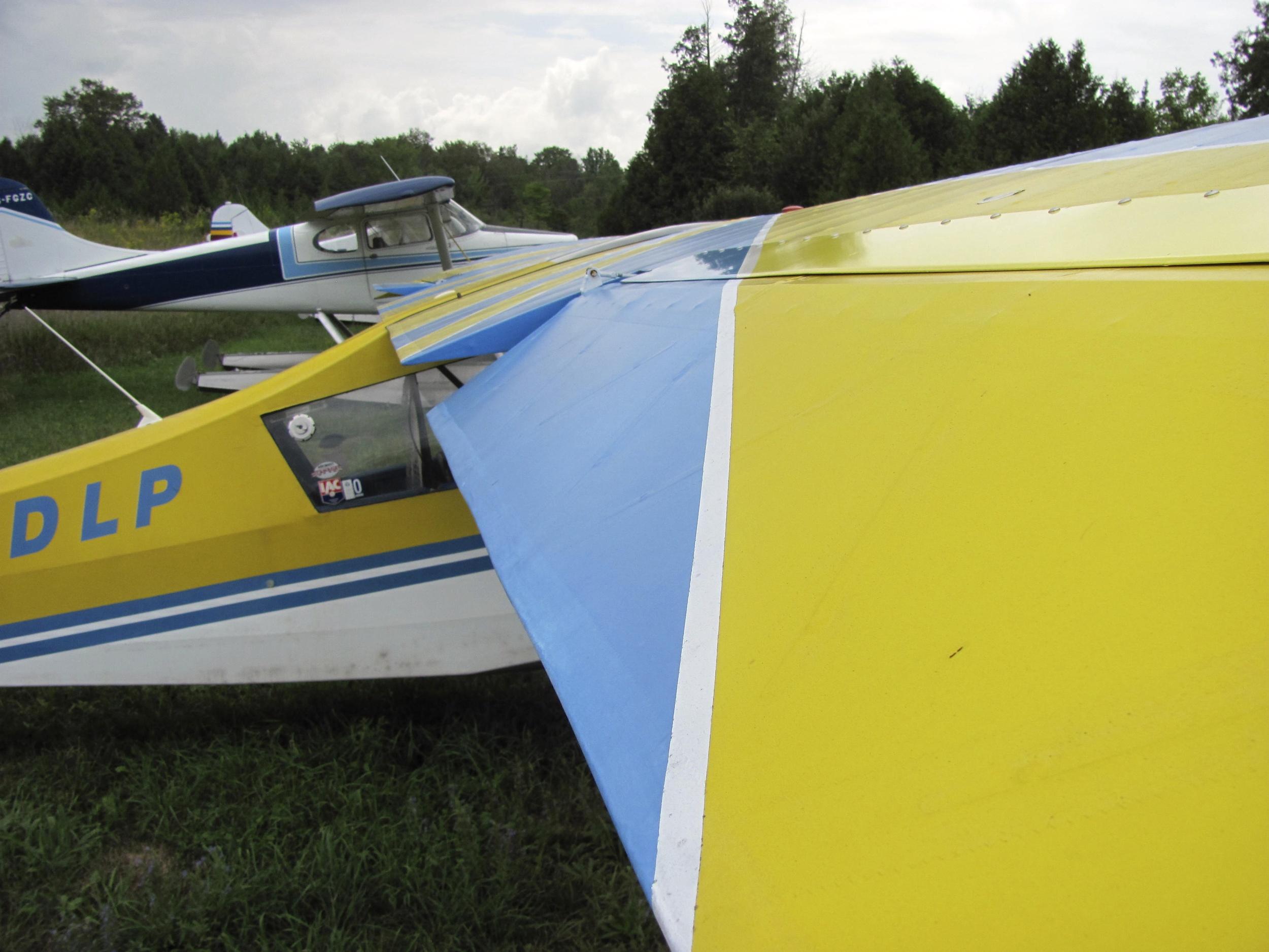 Yellow Wing   Balsam Lake, Ontario