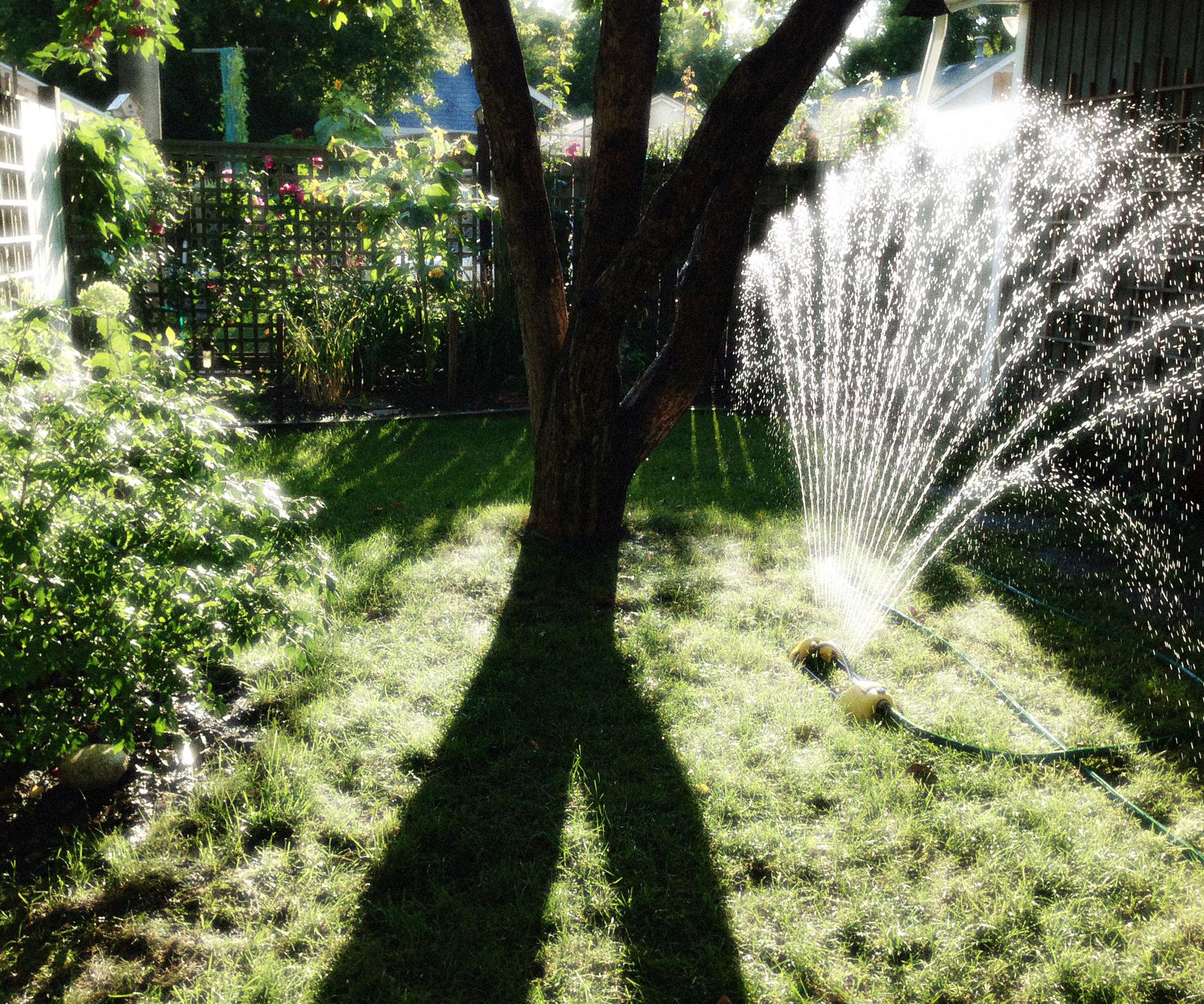 Trailing Days - Sprinkler, VHS 2014,  posted September 12, wk 12