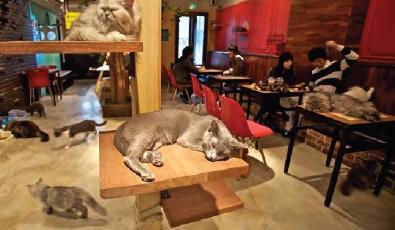 Cat Cafe, Edmonton, Alberta - precedent