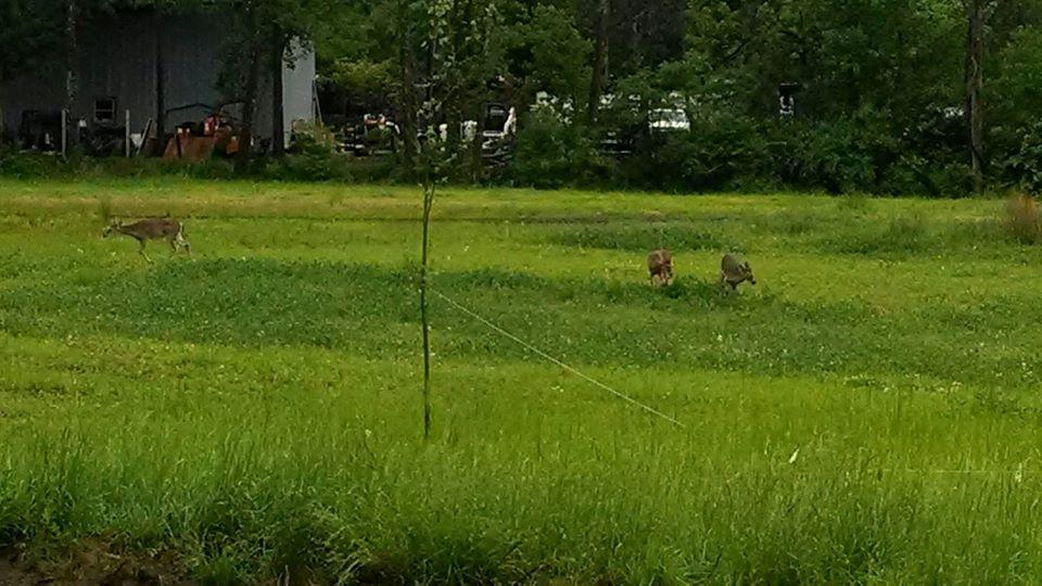 Deer frolicking at Zonolite Park