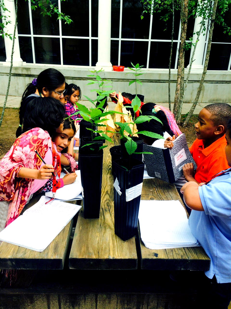 2nd graders at Garden Hills elementary evaluate the growth of their Chestnuts in Spring 2014.