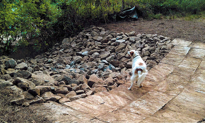 We convinced a local dog resident, Marley (who belongs to Donna Davis, president of the Cedar Chase Condominium Association), to pose for us on the bridge. Here he is right after the bridge was installed in 2012.