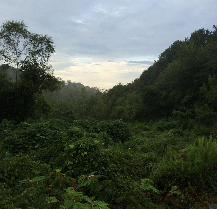 Meadow Before