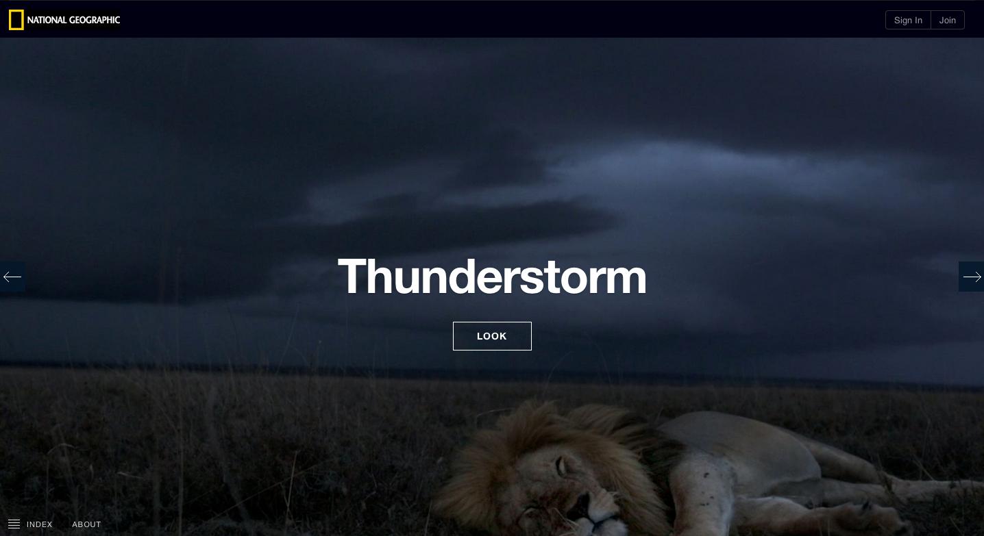 Serengeti Lions.png