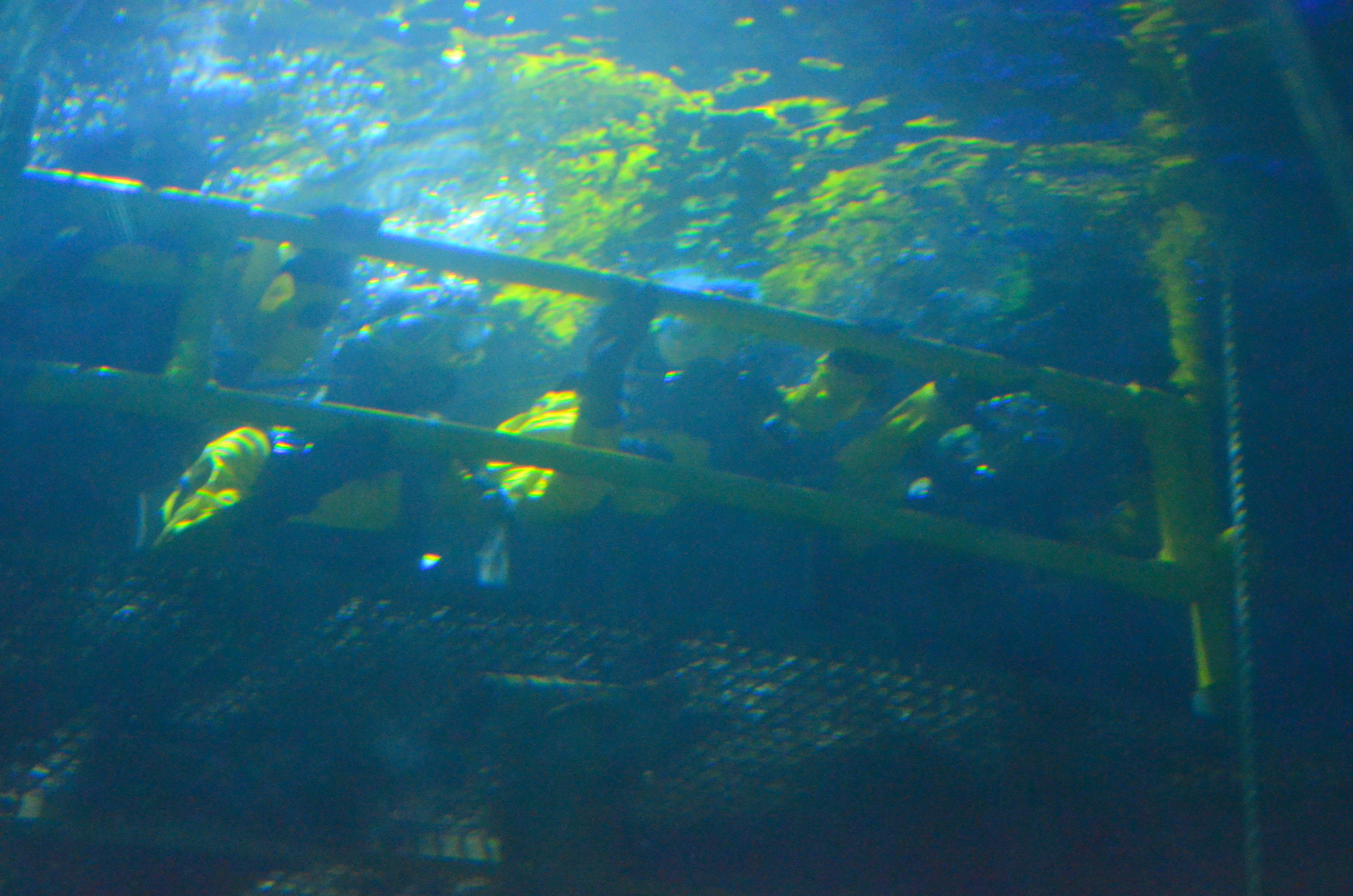 deepsea 6.jpg