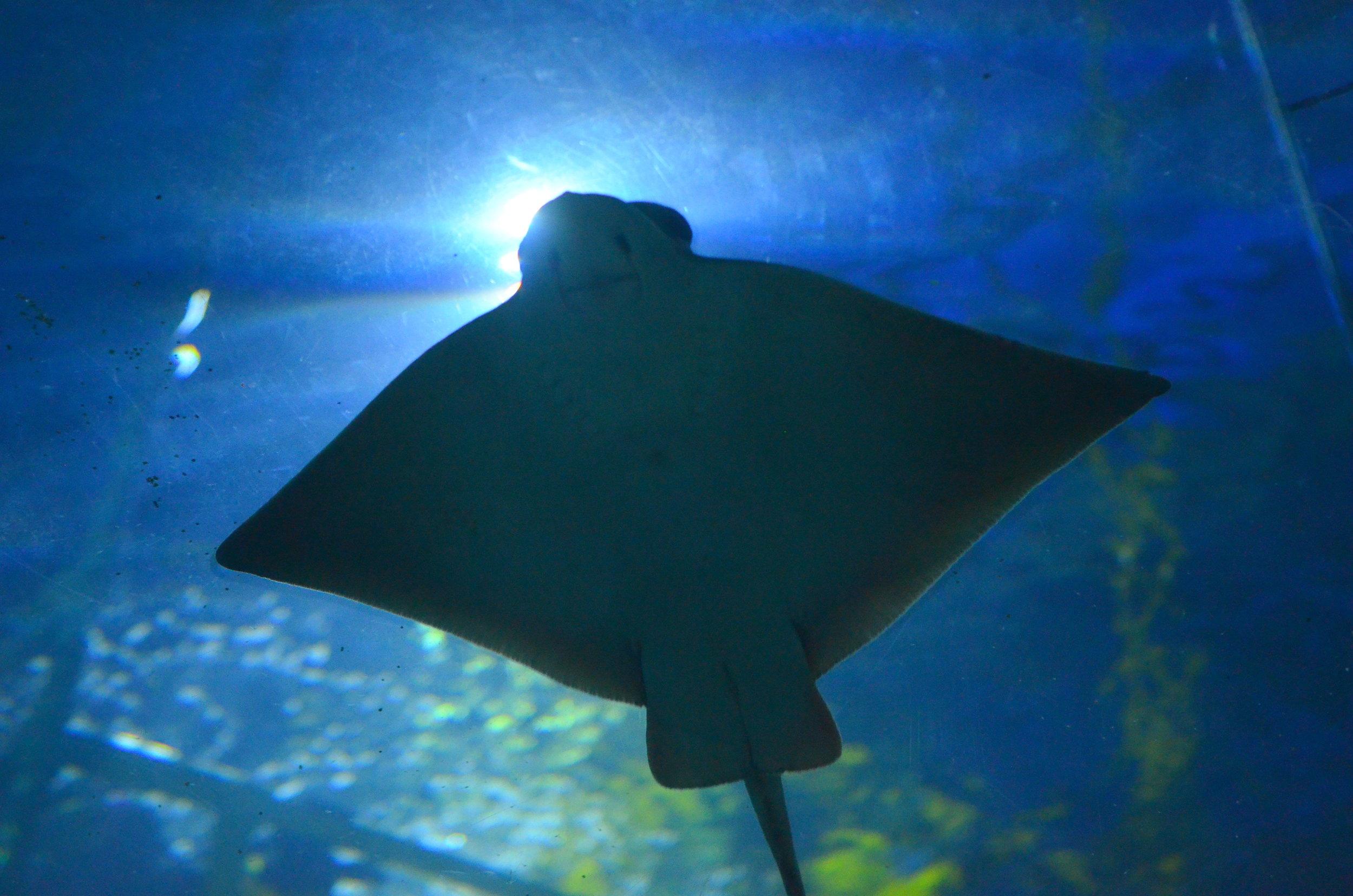 deepsea 1.jpg