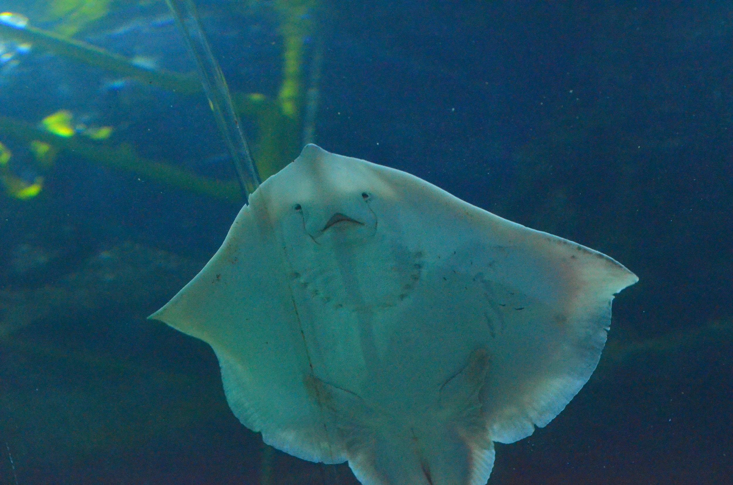 deepsea 3.jpg