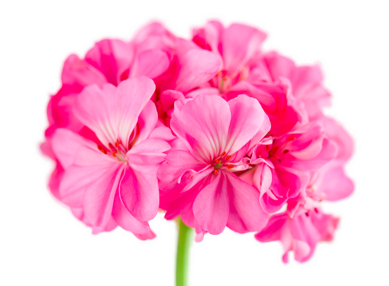 Stock photo of flower with white space.