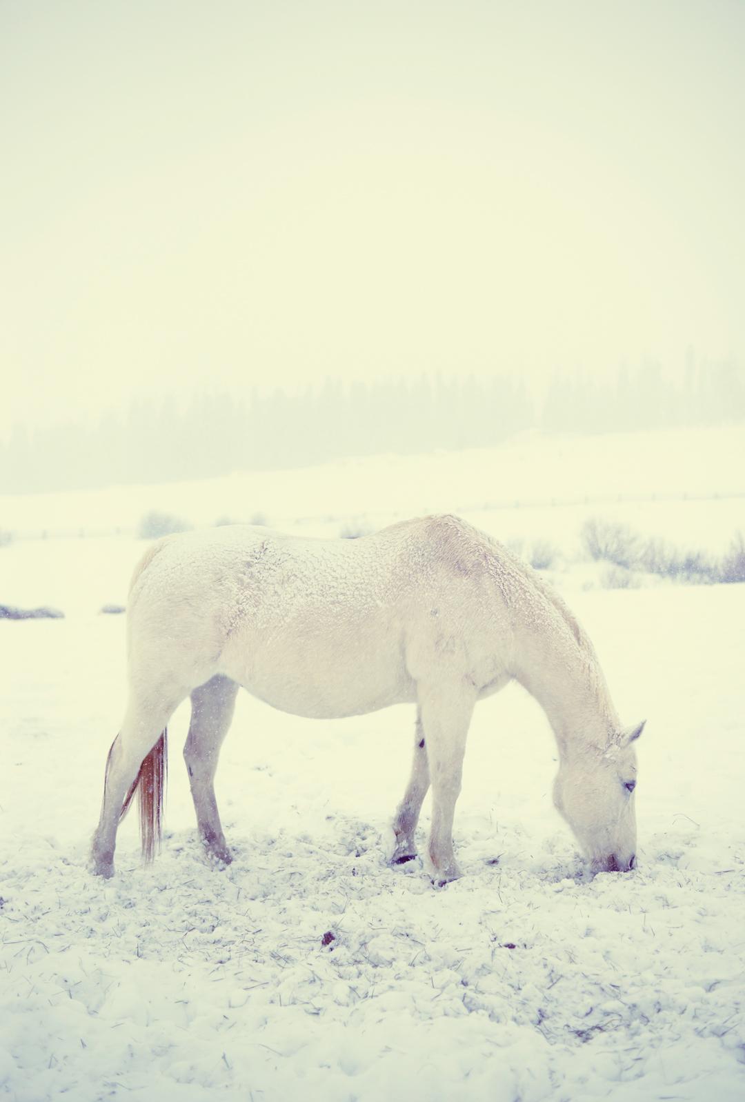 whiteonwhitehorse-copy.jpg