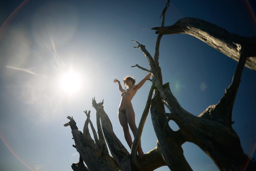 cori-storb-wild-driftwood.jpg