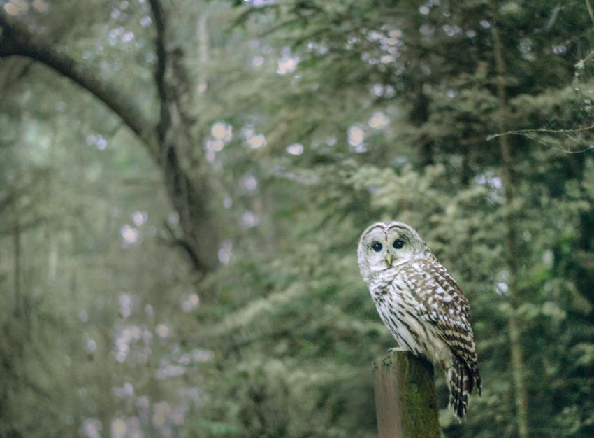 cori-storb-best-friend-barred-owl.jpg