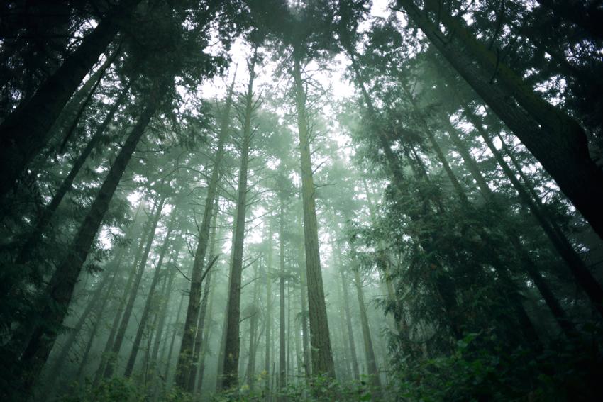 cori-storb-forest.jpg