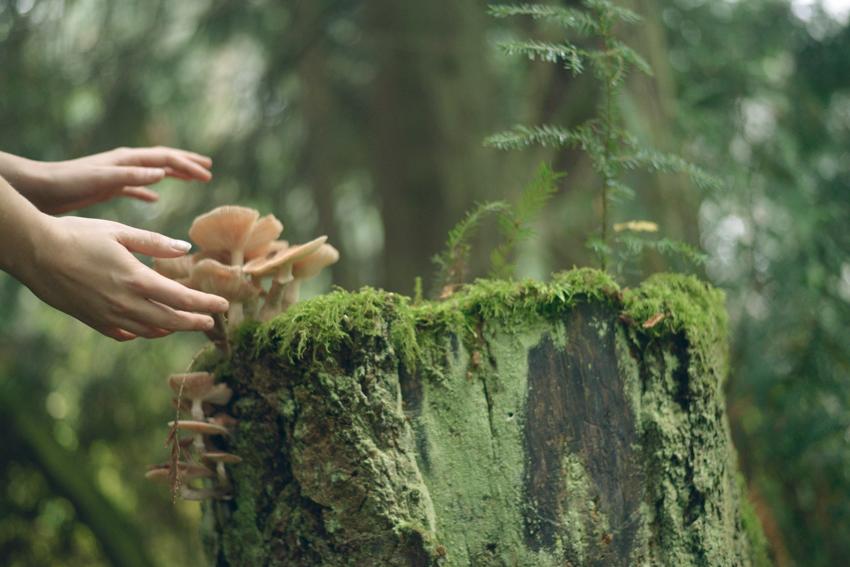 cori-storb-mushroom-hands.jpg