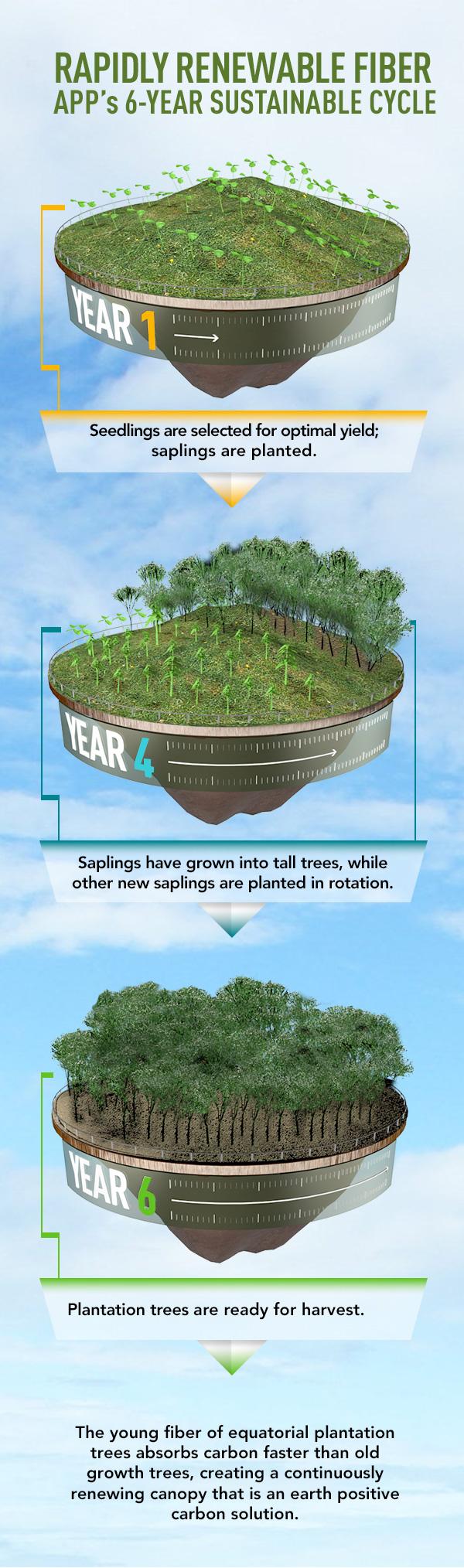 APP_tree_plantation_cycle.jpg