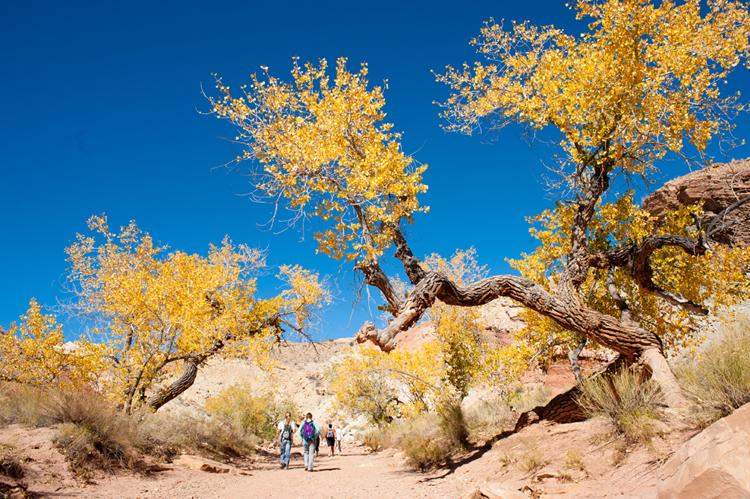 Yellow_trees_wildhorse.jpg